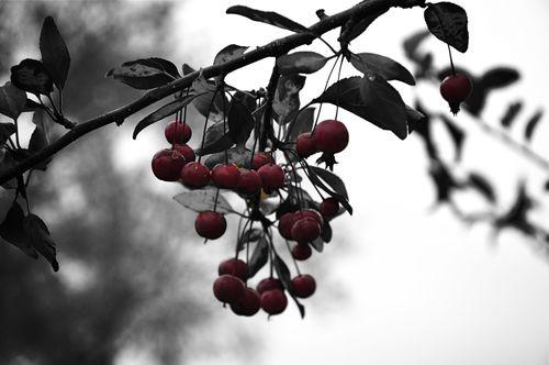 Wiberries