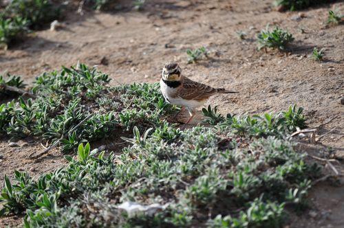 Groundbird
