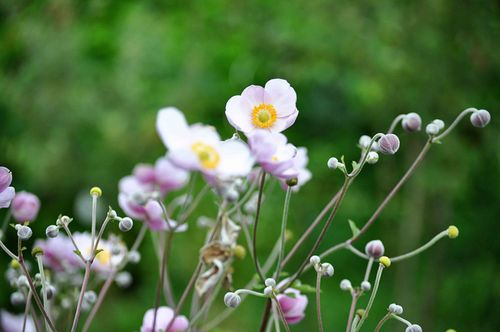 Trail-flower