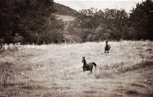 Horses-running-web