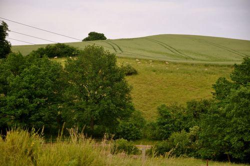 Sheep hill