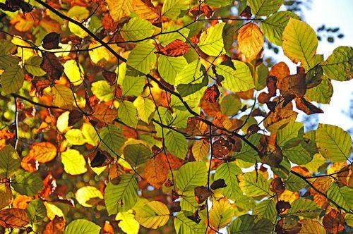 Gorge-leaves-web