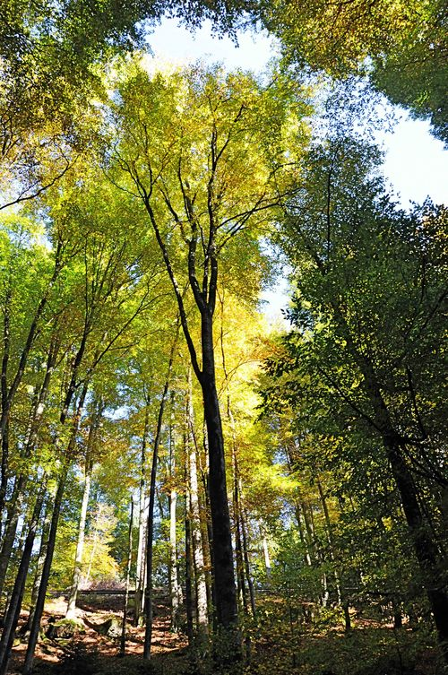 Groge-trees-web