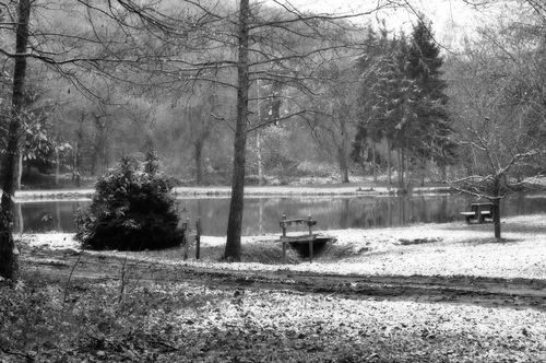 Thanksgvg-walk-pond-bw-web