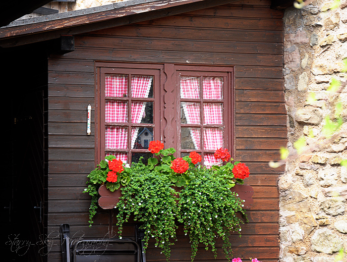 geraniums window