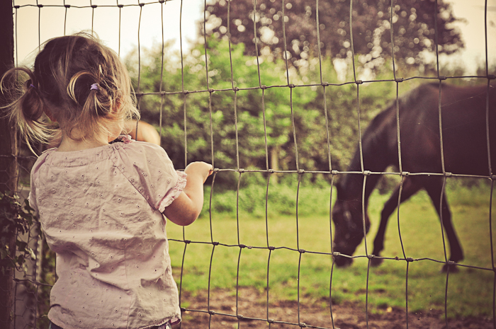 J horses web-3