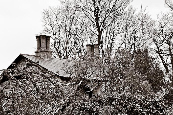 roof web