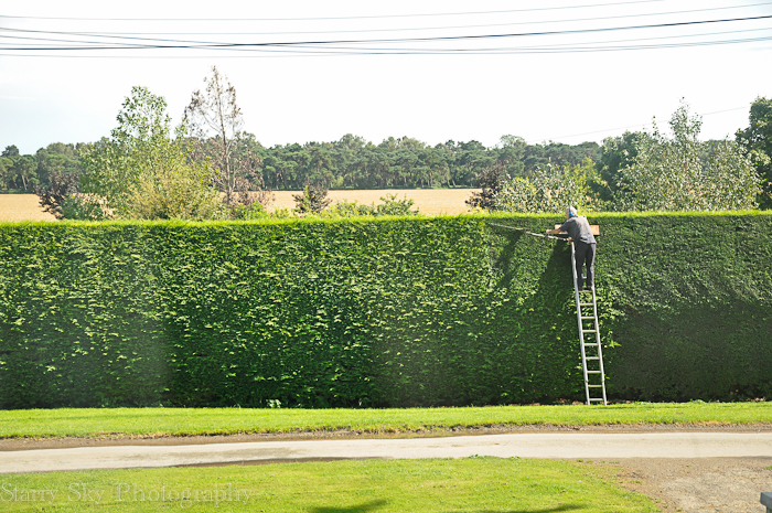 hedges web