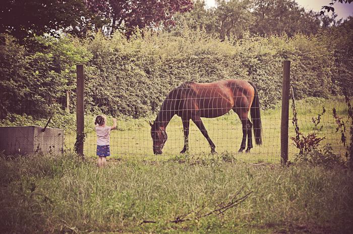horses web-2