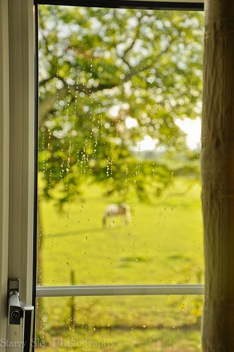 rain web-2