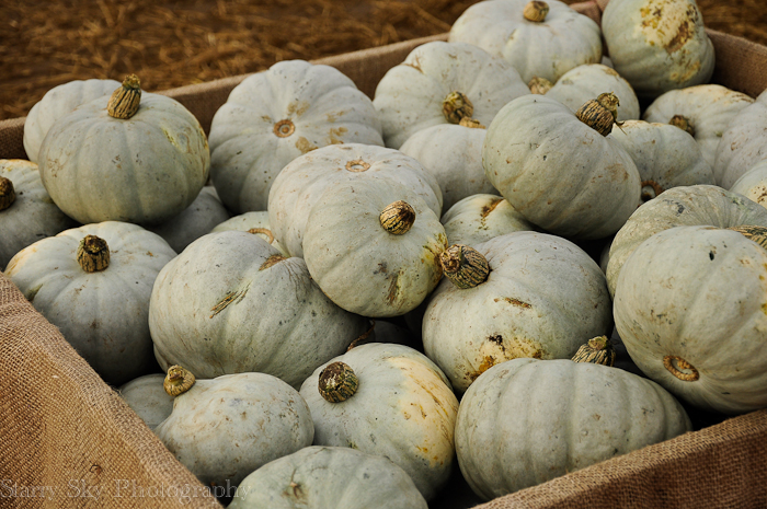 Oct 2012 pumpkin patch 5 web