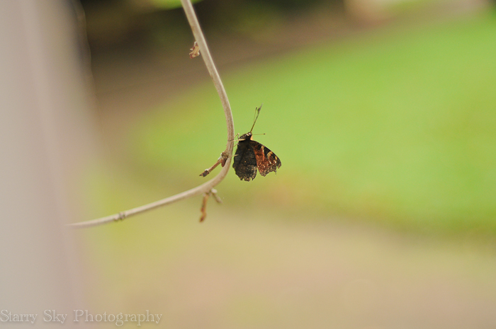 Oct 2012 butterfly web-3