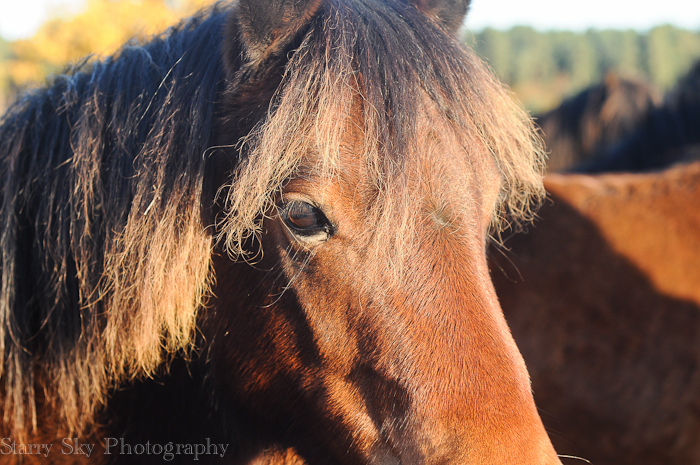 Nov 2012 ponies web-4