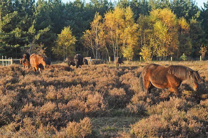 Nov 2012 ponies web-8