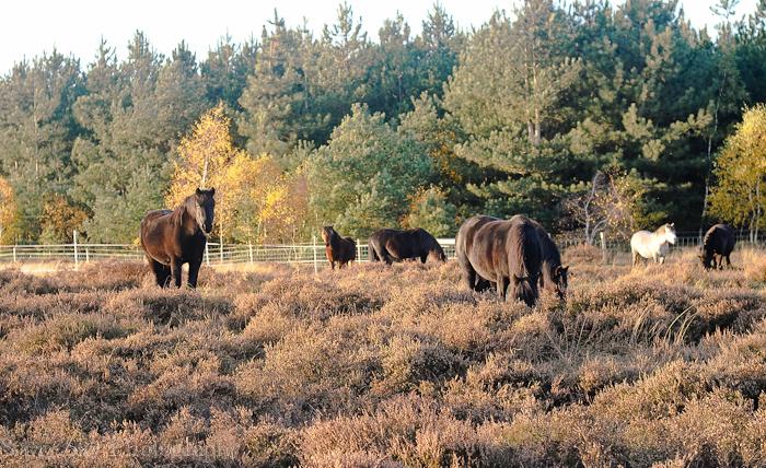 Nov 2012 ponies web-9