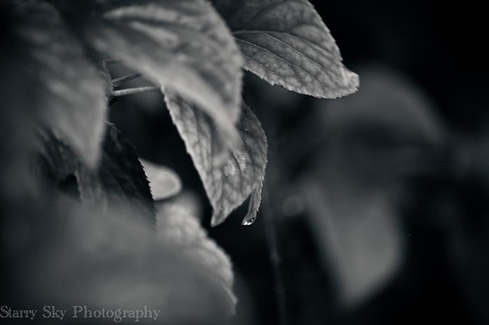Oct 2012 rain web-4