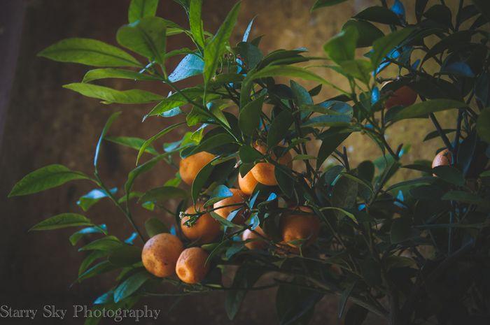 Apr 2013 orangery web-5