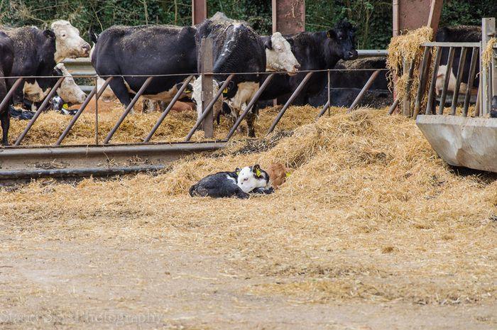 farm web-5