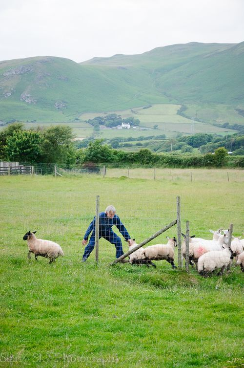 lake district shepherd web