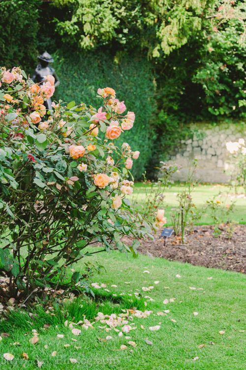 roses web-2