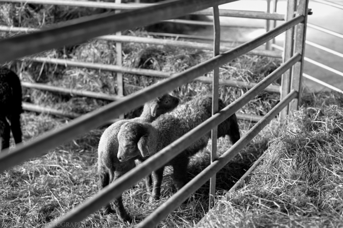 Apr 2014 wimpole bw web-9