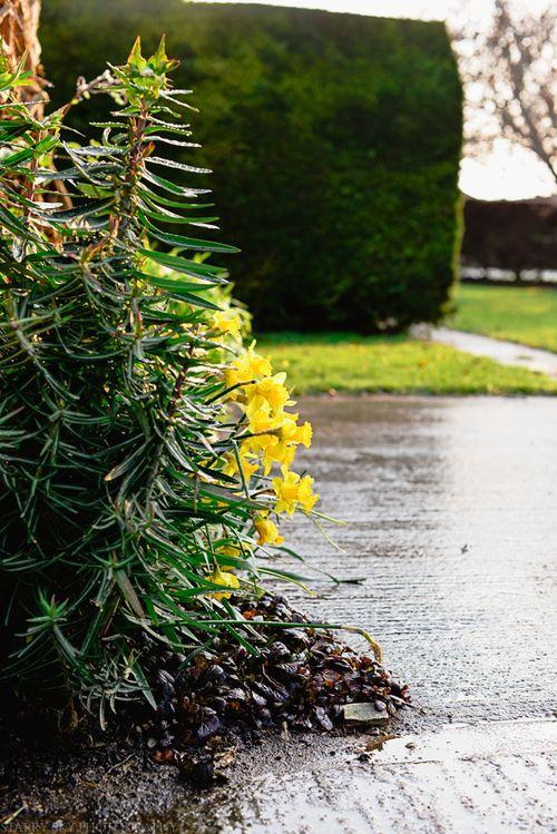 Mar 2014 garden web