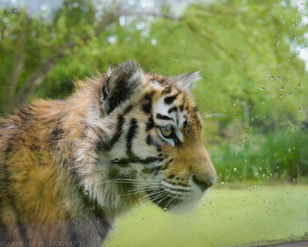 Apr 2014 zoo web-7