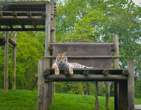 Apr 2014 zoo web-14