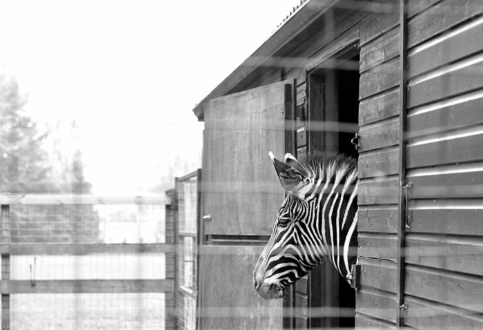 Apr 2014 zoo web-18