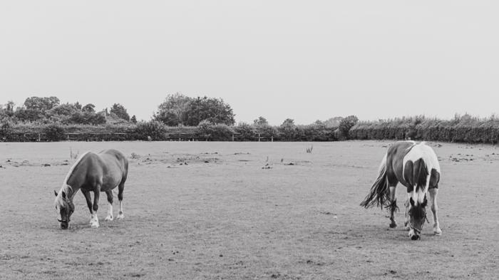 June 2014 pasture web-2