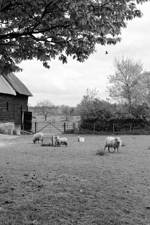 Apr 2014 wimpole bw web-4