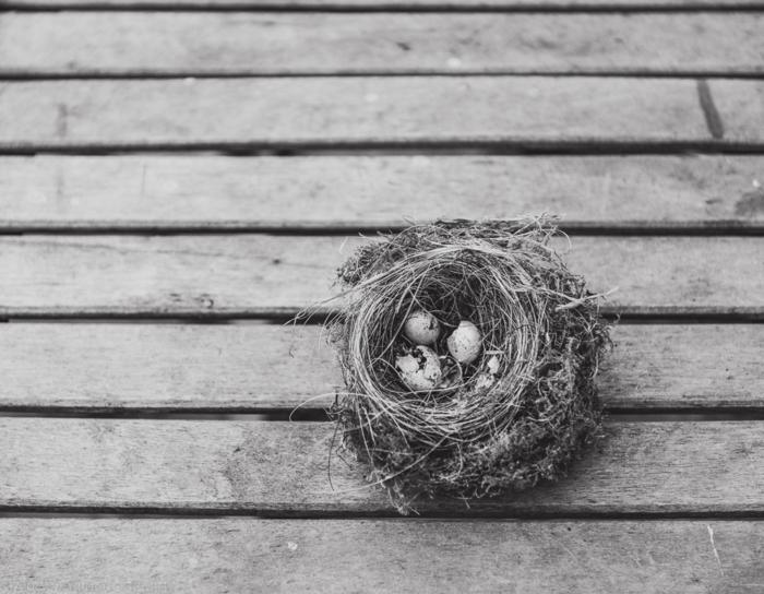 nest web-2