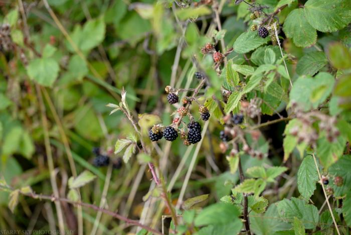 Sept 2014 berries web-2