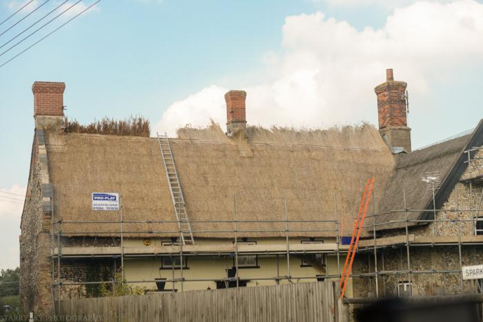 Sept 2014 thatch web