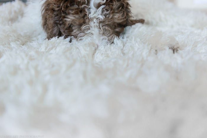 July 2015 puppy rug web (3 of 5)
