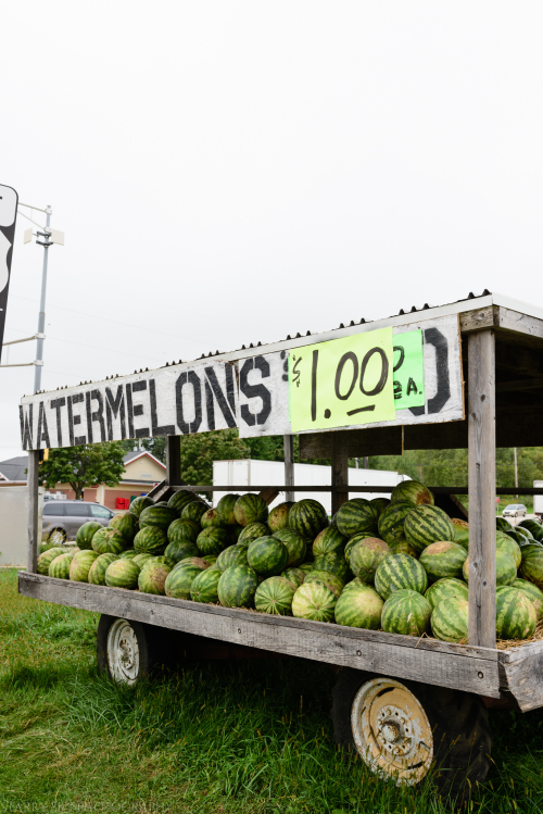 Aug 2016 watermelons wi web (2 of 7)