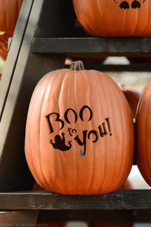 Oct 2017 halloween costumes web (4 of 4)
