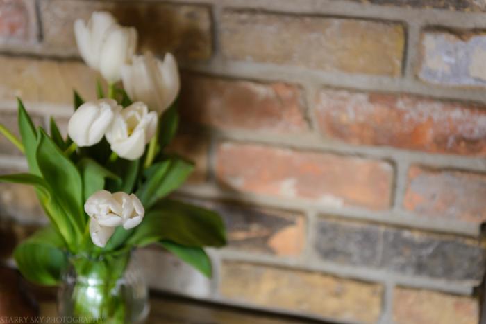Tulips web (1 of 1)