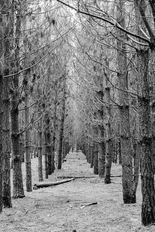 May 2014 thetford forest bw web (1 of 1)