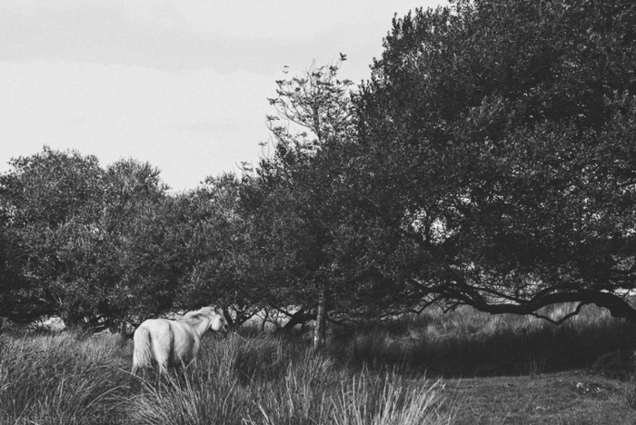 Sep 2014 dartmoor bw web (1 of 1)