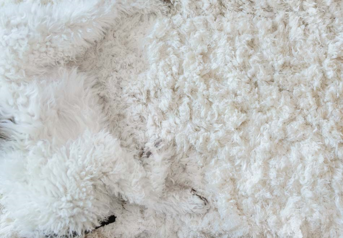 July 2015 puppy rug web (1 of 5)