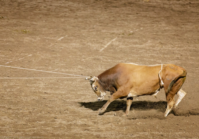 Jul 2015 ogden rodeo web (27 of 31)