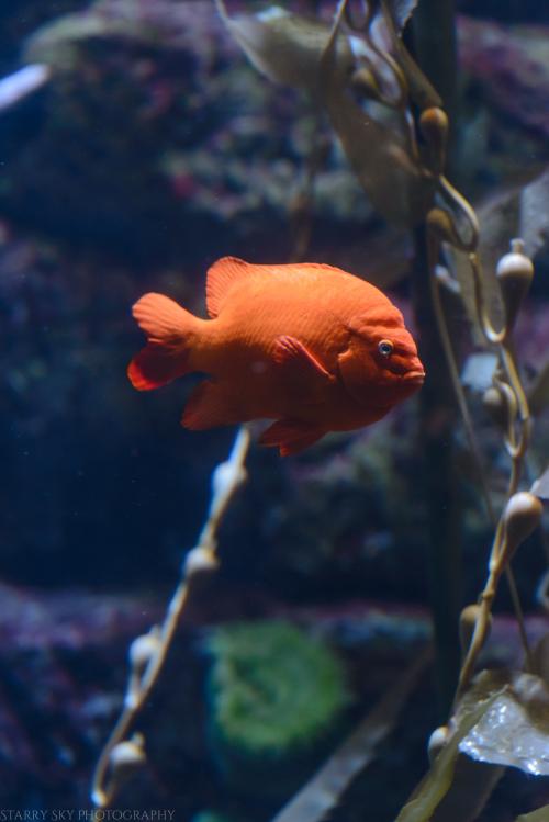 Oct 2017 aquarium web (8 of 9)