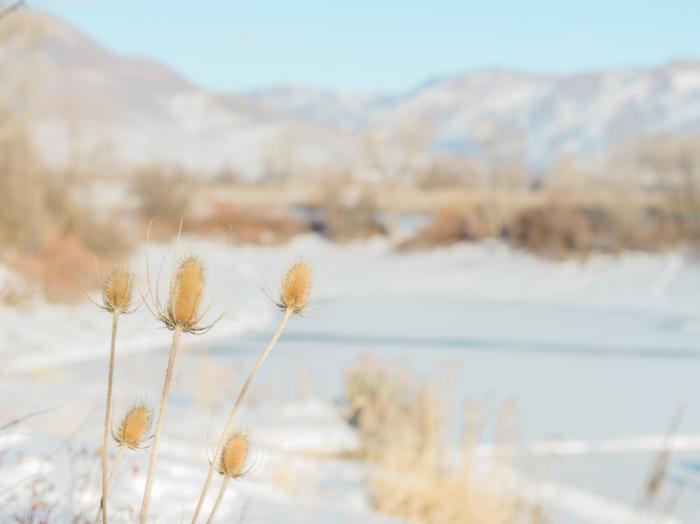 Jan 2018 winter weeds web (1 of 1)