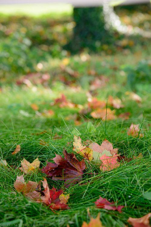 Oct 2014 fall walk web-6