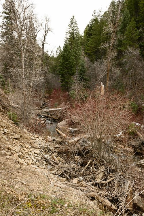 Mar  2015 wheeler creek web (6 of 15)
