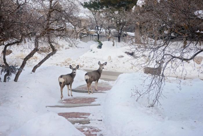 Jan 2016 deer  web (3 of 3)