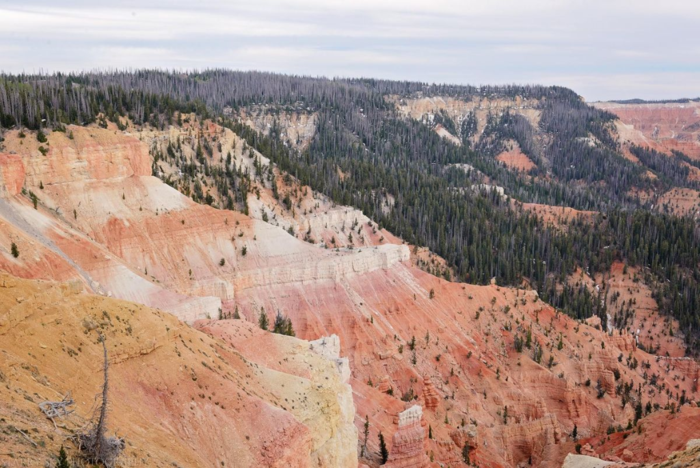May 2016 Cedar breaks web (7 of 7)