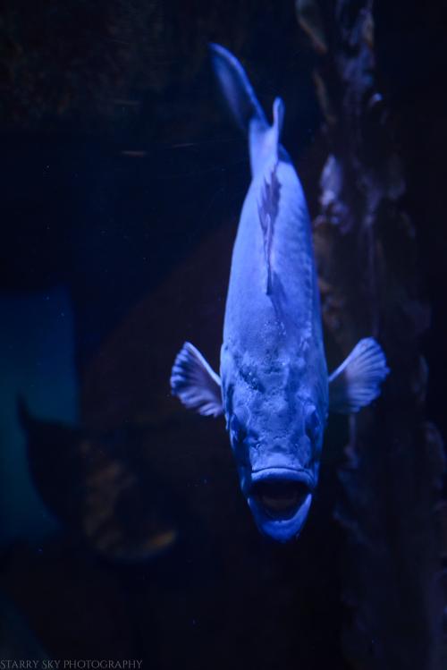 Oct 2017 aquarium web (5 of 9)