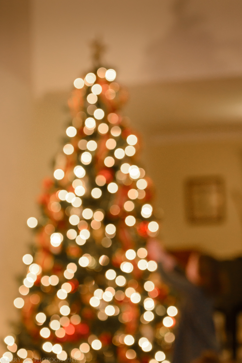Dec 2017 tree bokeh web (1 of 1)-2